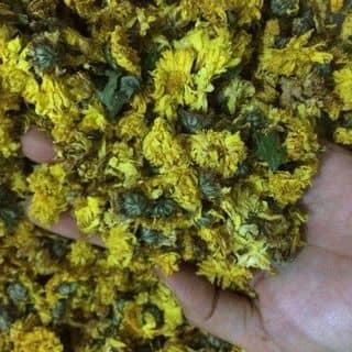 cúc Vàng của thaoduocsach87 tại Phố Cổ Đồng Văn, Huyện Đồng Văn, Hà Giang - 1692650