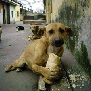 Cún của pagodasquans tại Thái Bình - 2953075
