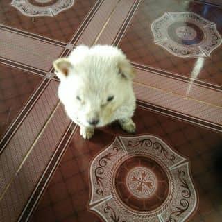 Cún Con của huynhvu52 tại Shop online, Huyện Ia Grai, Gia Lai - 2286907