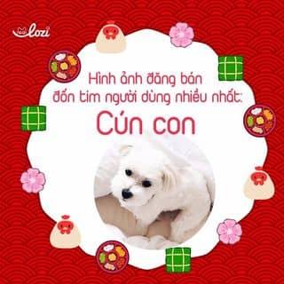 Cún con chạy khắp Lozi năm nay của lozi tại Hồ Chí Minh - 2490691