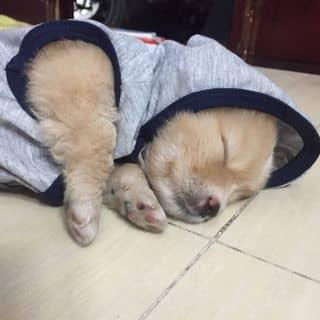 Cún cưng của khang1233 tại Hồ Chí Minh - 2965295