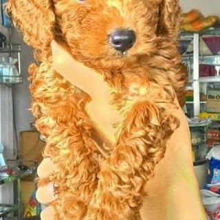 Cún yêu của ngocdinh94 tại Hồ Chí Minh - 1059603