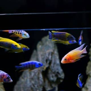 Cung cấp các loại cá ali giả biển tuyệt đẹp của ktrinhkien1 tại Hồ Chí Minh - 2117463
