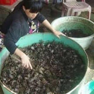 Đặc sản rạch gốc ba khía tươi.ba khía muối của nguyenhieuvan tại 12 Nguyễn Tất Thành, Thành Phố Cà Mau, Cà Mau - 1525405
