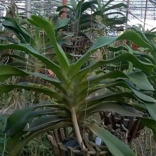 Đai châu của nguyendung1280 tại Shop online, Thành Phố Ninh Bình, Ninh Bình - 2538456