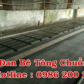 Đan bê tông chuông heo của phuongtran309 tại Bà Rịa - Vũng Tàu - 2012328