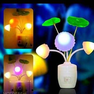 Đèn ngủ nấm cảm ứng của hoanhoang1 tại Thanh Hóa - 911898