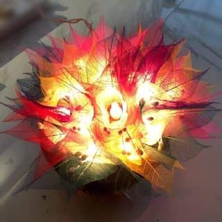 Đèn ngủ nở hoa 💡💡💡 của quynhtruc28 tại Cà Mau - 791393