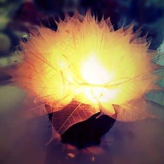 Đèn ngủ nở hoa 💡💡💡 của quynhtruc28 tại Cà Mau - 791398