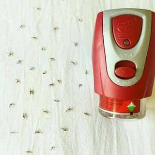 Đèn tinh dầu diệt muỗi Ấn Độ của nhoxauxa1 tại Lý Thường Kiệt, Thành Phố Đồng Hới, Quảng Bình - 3195464