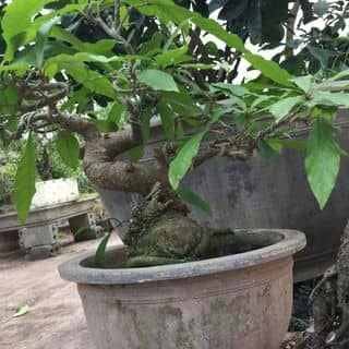 Đẹp của thanhniennghiemtuc11 tại Thái Bình - 2591391