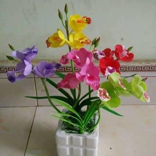 Địa lan của dattamhon tại Thanh Hóa - 893898