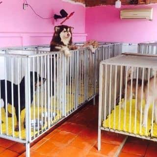 Dịch vụ lưu giữ & Vận chuyển Pet cưng - SaiGon Petcare của rintungtung5snt tại Khánh Hòa - 2501998