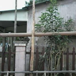 Đồng đông gác nhà của levanhung10486 tại Đà Nẵng - 2894329