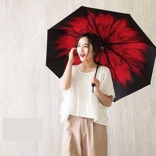 Dù Hoa Red Daisy của sabj tại 35B Lê Trực, phường 7, Quận Bình Thạnh, Hồ Chí Minh - 653124