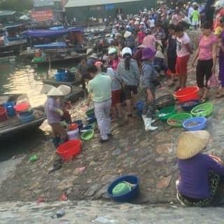 Du lịch của sont1819 tại Chợ Hạ Long 1, Đường Lê Thánh Tông, Thành Phố Hạ Long, Quảng Ninh - 695759