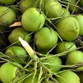 Dừa xiêm bến tre. của buogbig tại Bắc Ninh - 866201