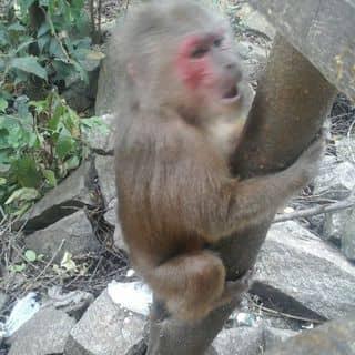 em khỉ xih tầm 1 năm tuổi của lyhongngan tại Lâm Đồng - 2389793
