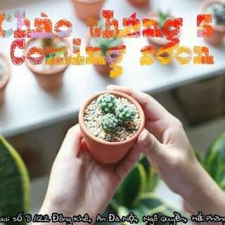 Face:Dream Garden Shop của dreamgardenshop tại Hải Dương - 3206994
