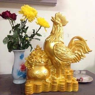 Gà Vàng của egapham tại Quảng Bình - 2256359