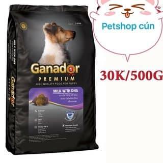 Ganador puppy của turbo.beo tại An Giang - 1787760