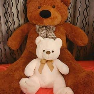 Gấu của dieu294 tại Đà Nẵng - 2465326