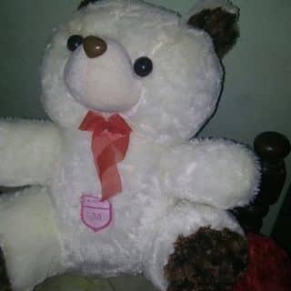 Gấu của leppnguxii tại Bắc Kạn - 2763269