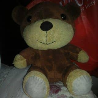 Gấu bôg nâu của thanh2105 tại Thái Bình - 2989000