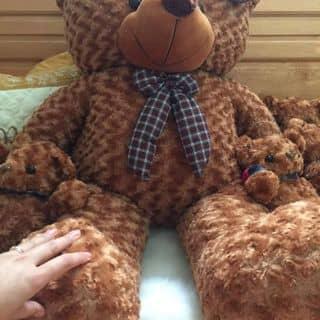Gấu bông của tongngoc87 tại Sơn La - 2122982