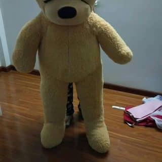 Gấu bông. của nguyenvan665 tại Đắk Lắk - 2527607