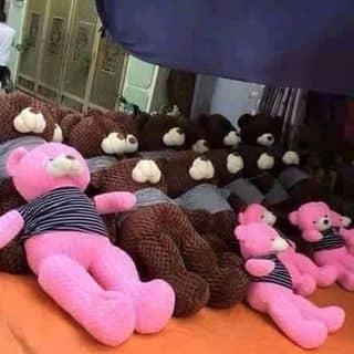 Gấu teddy của riochi1 tại Shop online, Thành Phố Huế, Thừa Thiên Huế - 1621463
