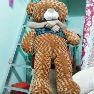 Gấu teddy của trandiemmai tại 47 Thống Nhất,  Liên Nghĩa, Huyện Đức Trọng, Lâm Đồng - 928120