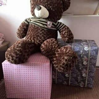 Gấu teddy của napielien tại Thừa Thiên Huế - 1511427