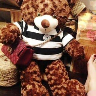Gấu teddy của quyensuciu tại Xã Phú An, Huyện Phú Vang, Thừa Thiên Huế - 3024103