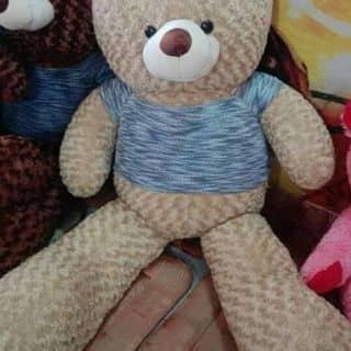 Gau teddy của khactaose2 tại 68G Võ Văn Kiệt,  P. Long Hòa, Quận Bình Thủy, Cần Thơ - 2193223