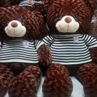 Gau teddy của xemdethuong tại Lâm Đồng - 2289575