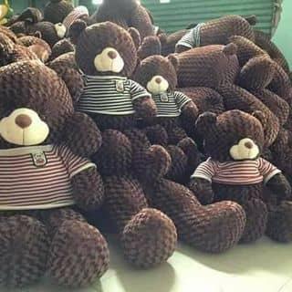 Gấu teddy của vothiet1 tại Đồng Tháp - 2151648