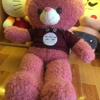 Gấu Teddy áo totoro mắt to size 80cm của gaubongxinhshop tại 131 Cù Lao, phường 2, Quận Phú Nhuận, Hồ Chí Minh - 2906870