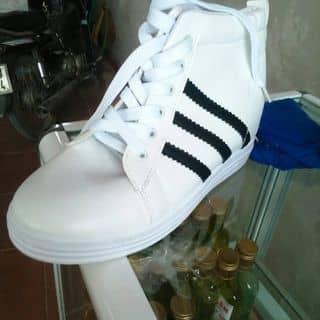 giày của haquangkhanh1 tại Đường 57,  Lâm, Huyện Ý Yên, Nam Định - 2520055