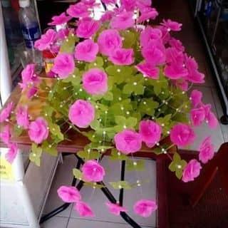 Giấy của lephuong423 tại Shop online, Huyện Đạ Tẻh, Lâm Đồng - 2166838
