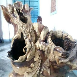 Gốc cây của nhan26 tại Ninh Thuận - 906656