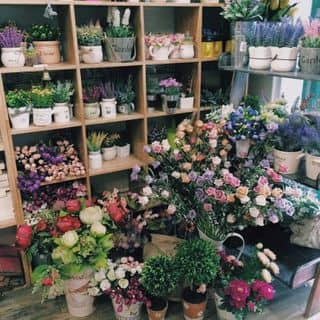 Góc hoa của shop của directionlk tại 174/4 Đặng Văn Ngữ, phường 14, Quận Phú Nhuận, Hồ Chí Minh - 583268