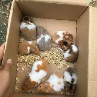 Hamster của mainhi22 tại Kiên Giang - 2865975