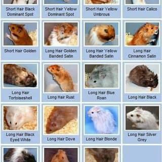 Hamster Bear của thomas.fat93 tại Hồ Chí Minh - 2462830