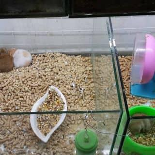 hamster bear nhé  của linh0507cute tại Hồ Chí Minh - 2951673