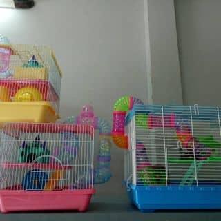 Hamster và vật dụng của xuanhung1204 tại Hồ Chí Minh - 3455723