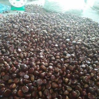 Hạt dẻ của pham1792016 tại 162 Nguyễn Tất Thành, Huyện Đắk Mil, Đắk Nông - 877034