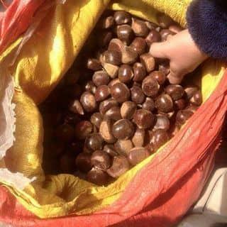 Hạt dẻ tươi của phamha242 tại Bình Phước - 2406089