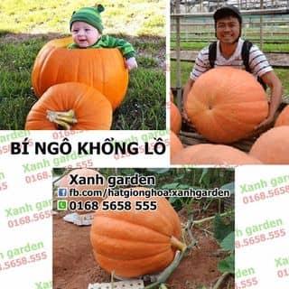 HẠT GIỐNG BÍ NGÔ KHỔNG LỒ F1 của xanhgarden tại Hồ Chí Minh - 2673718
