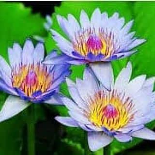 Hạt giống cây cảnh handmade của phungluong2 tại Shop online, Huyện Thái Thụy, Thái Bình - 1408581